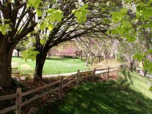 Oklahoma Country Homes Wellston Ok Real Estate Myriad Gardens Overhanging Tree